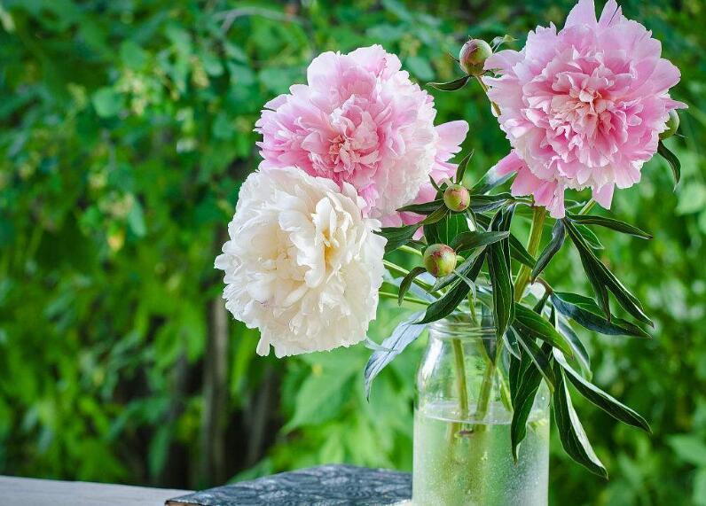 给长辈送花