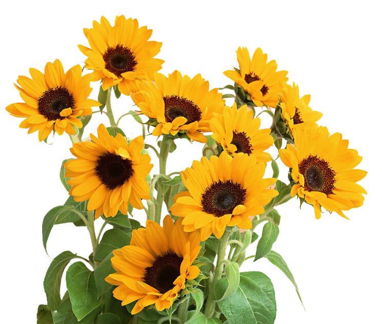 父亲生日送什么鲜花
