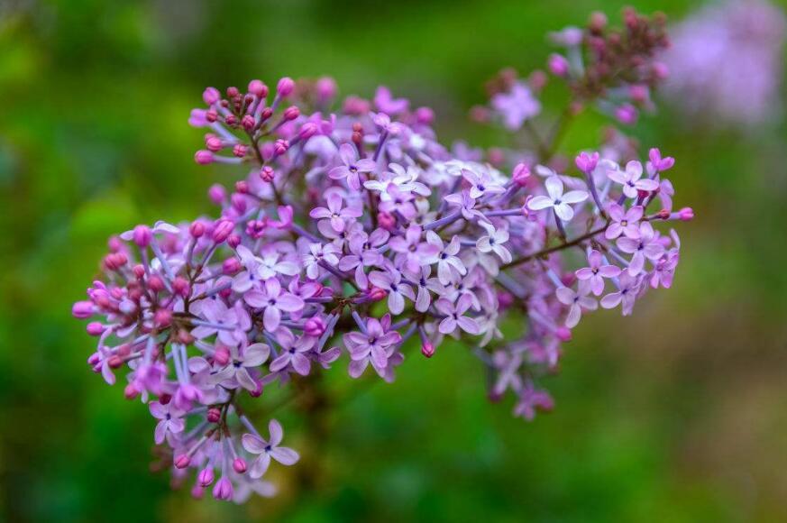 夏日婚礼可以用哪些鲜花来点缀?