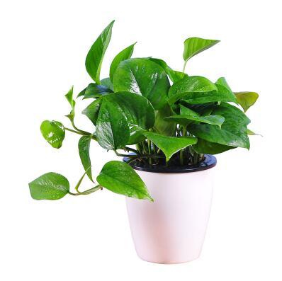 办公室适合放哪些植物?