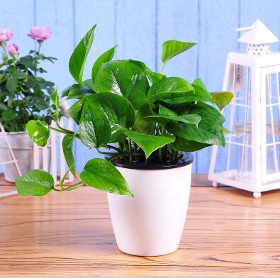 懒人适合养的植物有哪些?