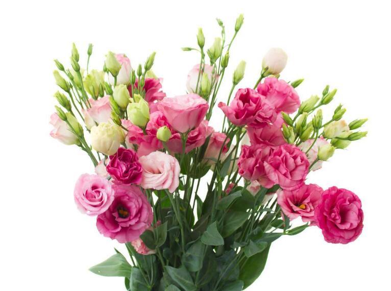 盘点那些超级受欢迎的鲜花