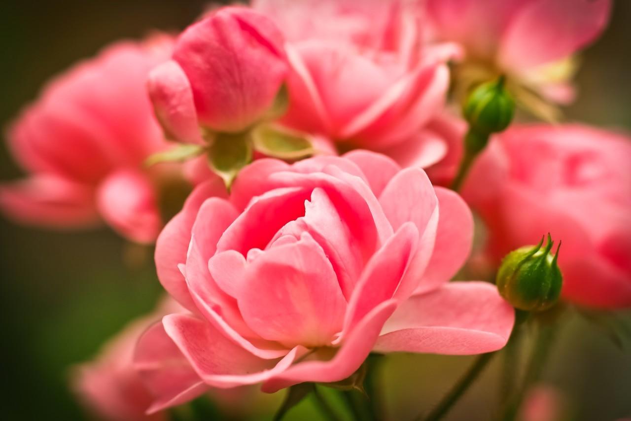 夏天鲜花怎么养护保持新鲜?