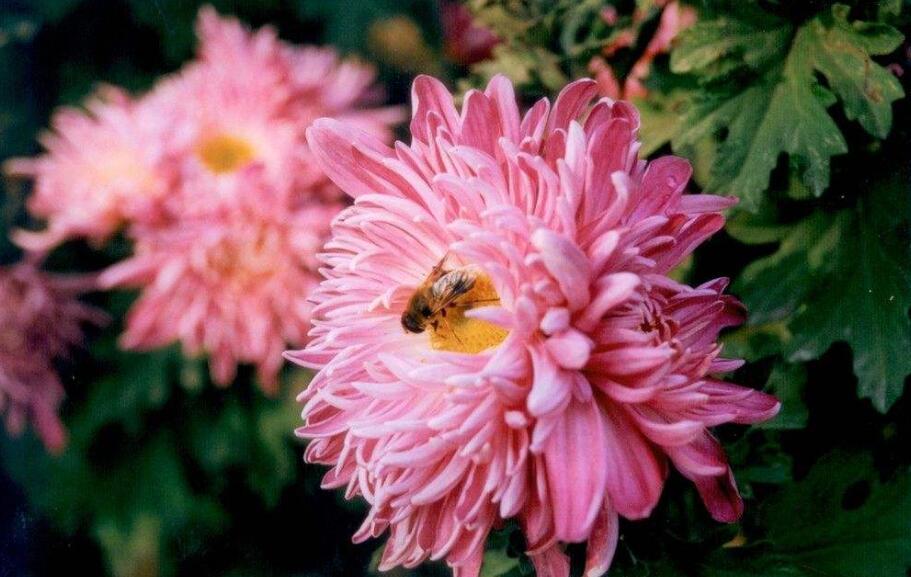 生活常见的十二种鲜花花语全集