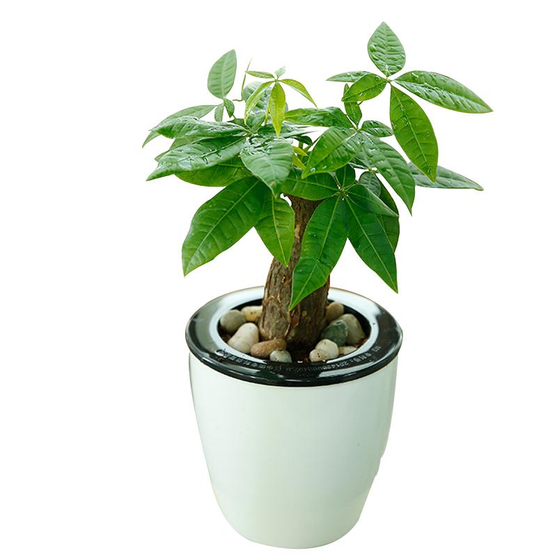 卧室植物风水禁忌
