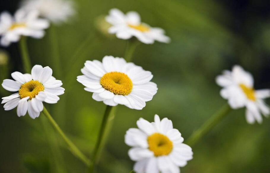 蚊子怕这8种花,赶紧养起来吧!