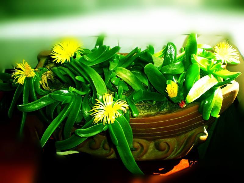给老人祝寿可以赠送什么鲜花比较好