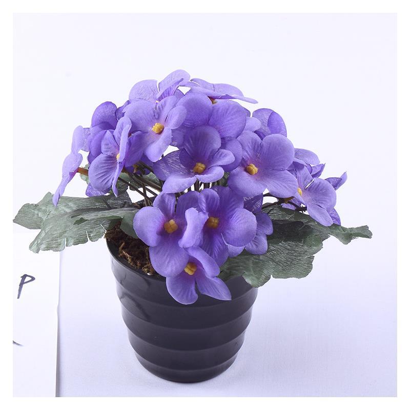 紫罗兰花语是什么?紫罗兰图片
