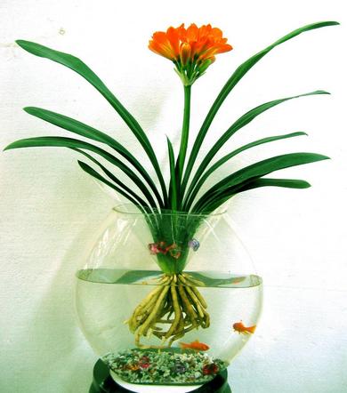 水培植物有哪些