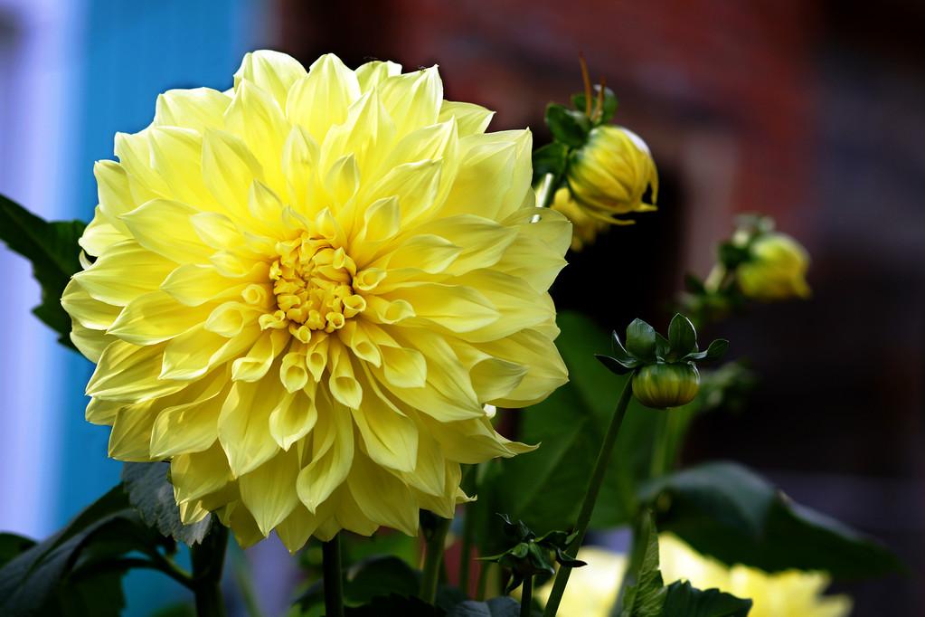 世界上什么颜色的花*多?