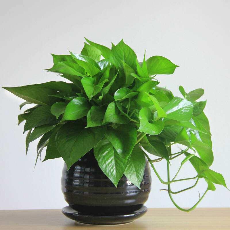 办公室风水植物摆放也分五行?