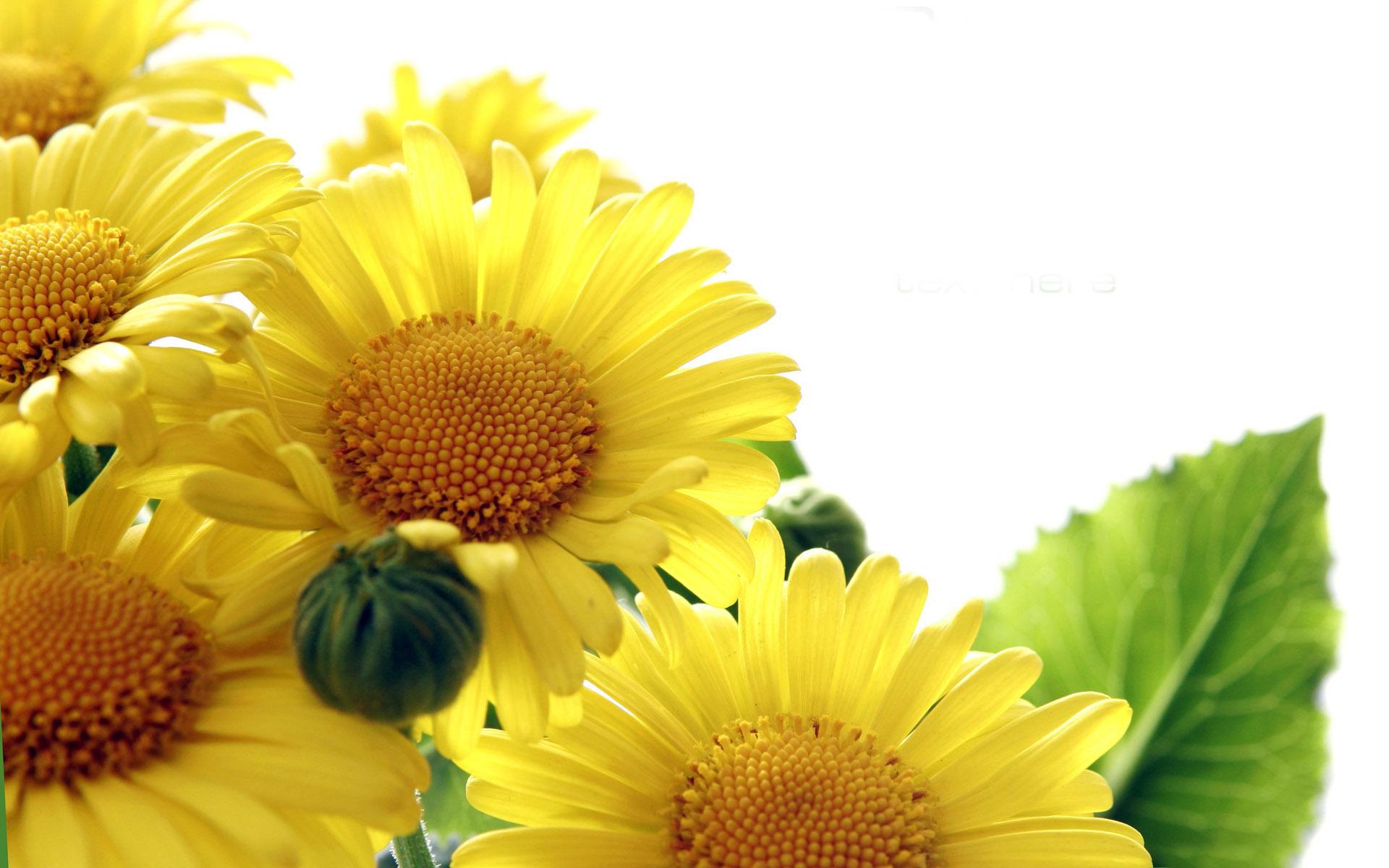 你不知道的三种太阳花!