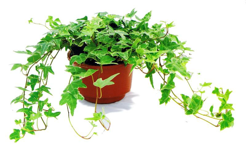 早该掌握的植物养护小技巧是什么