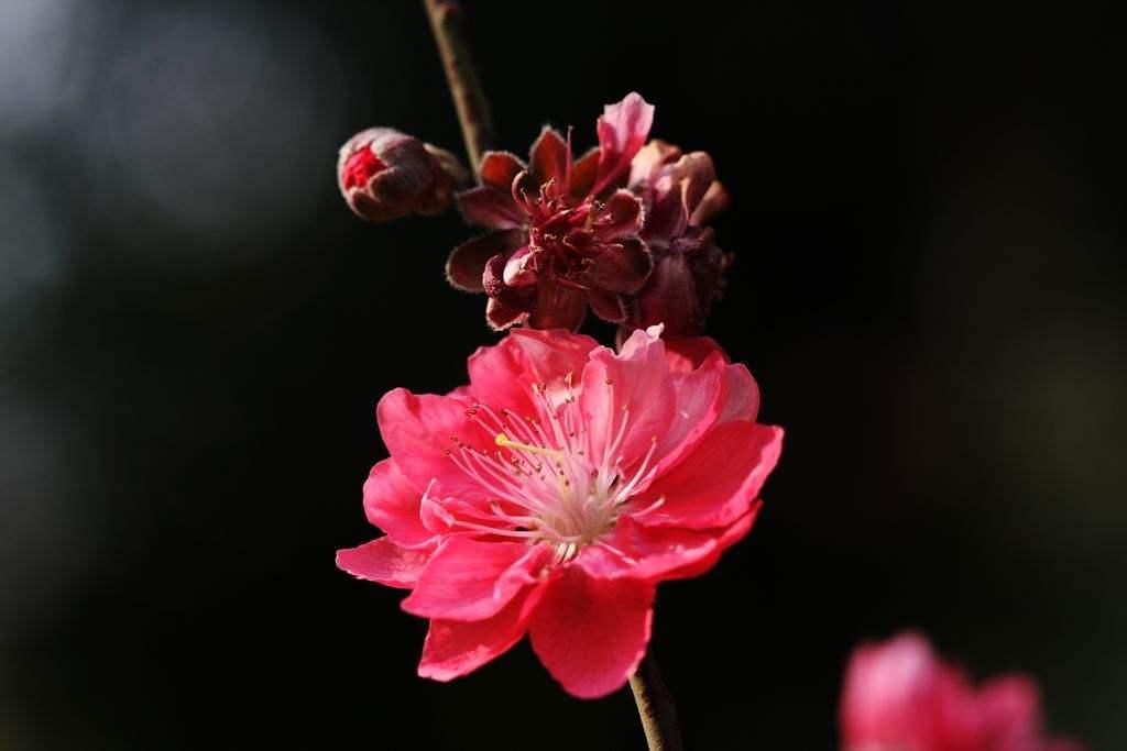 每月一朵花你是哪种花?