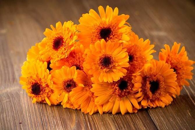适合春天播种的花卉植物有哪些?