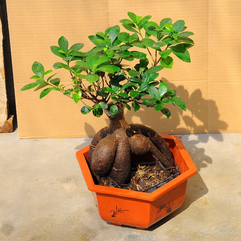 室内盆栽植物种植养护_适合室内种植植物都是哪些