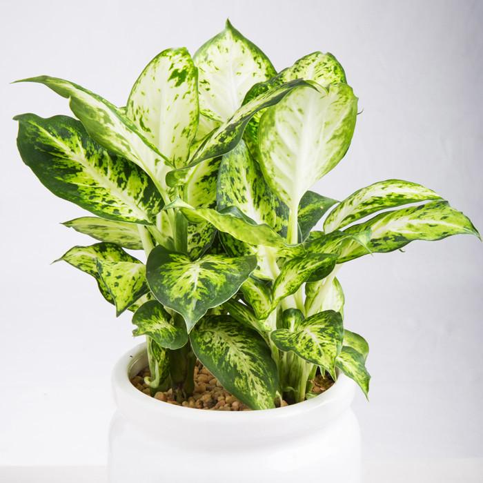 水养植物有哪些