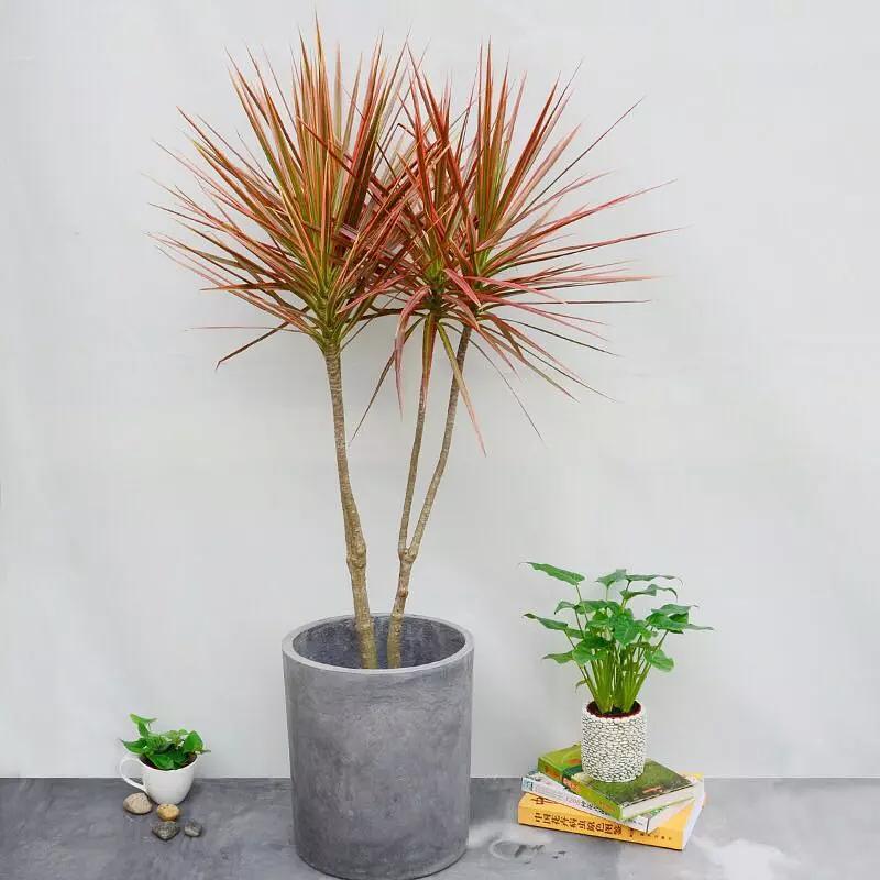 适合在室内种植的植物,家居生活需要更多绿色