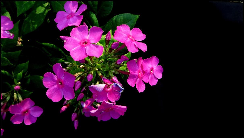 适合秋天播种的花儿有哪些?