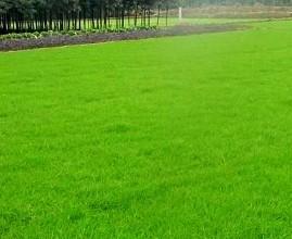 如何打造四季常绿的草坪?这些养护方法不可少!