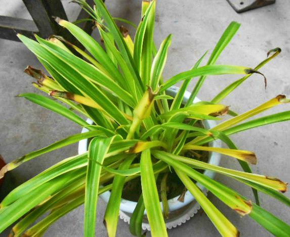 家里植物叶子表面出现了这些?那就得注意了!