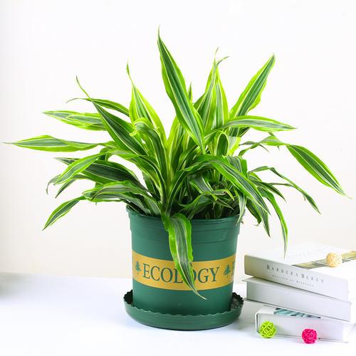 常见的室内植物养护管理技巧是哪些