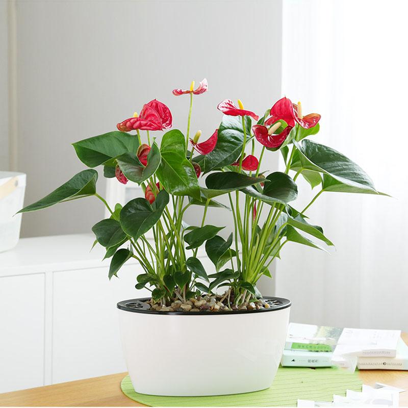 办公室适合摆放哪些植物呢?
