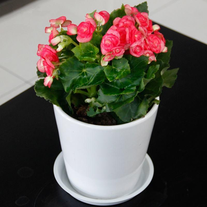 办公室绿化植物提前开花的诀窍是什么