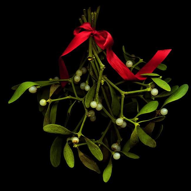 圣诞节挂槲寄生代表什么?