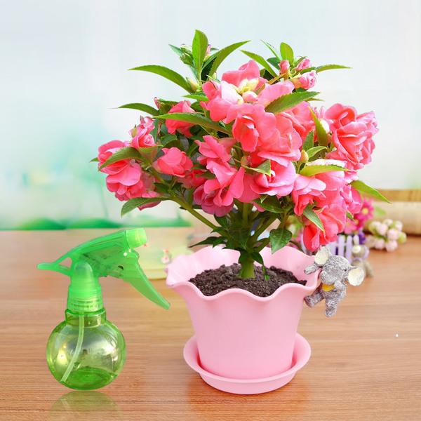 凤仙花养殖栽培注意事项你了解哪些?