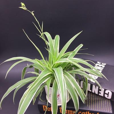 室内绿色植物养护知识都有哪些