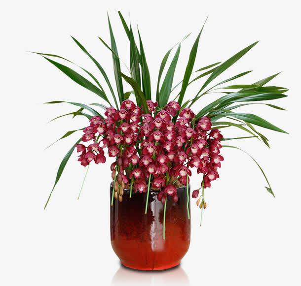 大花蕙兰的种植养护技巧有哪些