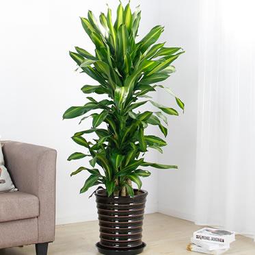绿色植物对健康的作用和好处有哪些