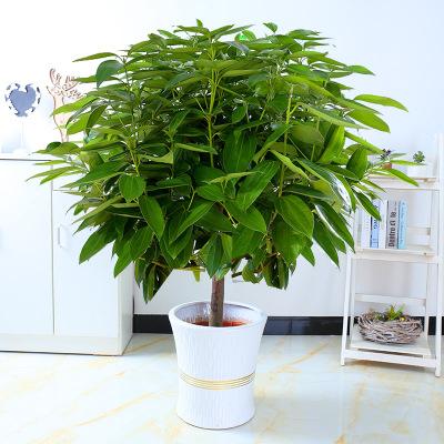 冬季露天花木如何养护
