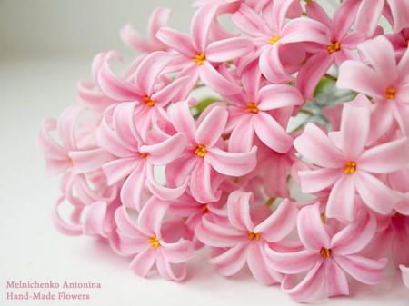 粉色风信子花语是什么呢