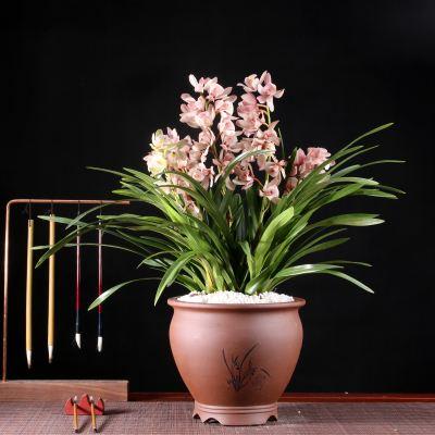 为兰花分盆的四个注意事项是哪些