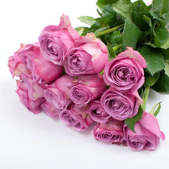 紫色玫瑰代表什么意思