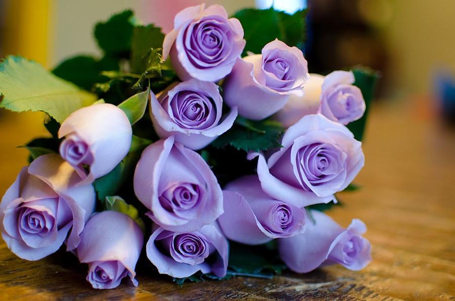 紫色玫瑰花语是什么,浪漫真情/忧郁感伤等