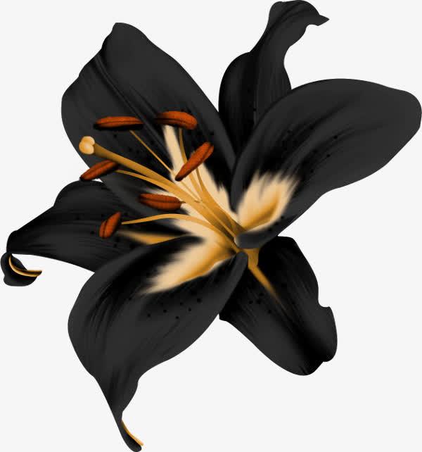世界上花语为复仇的花,黑色曼陀罗/黑百合/天仙子等