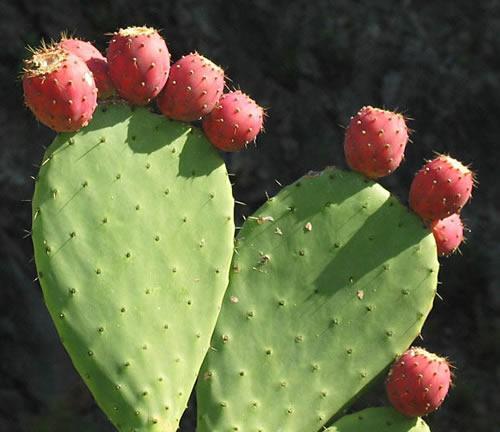 4招仙人掌的养殖方法 教您养出健壮的仙人掌