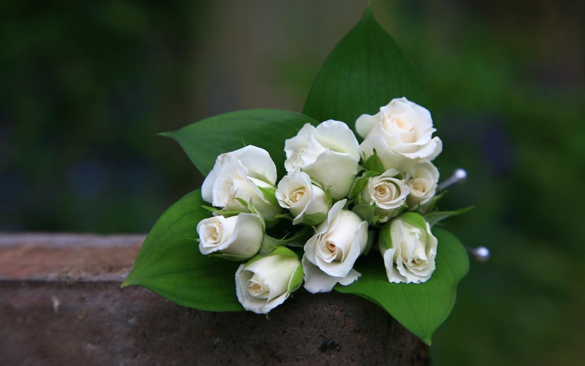 白玫瑰的花语介绍
