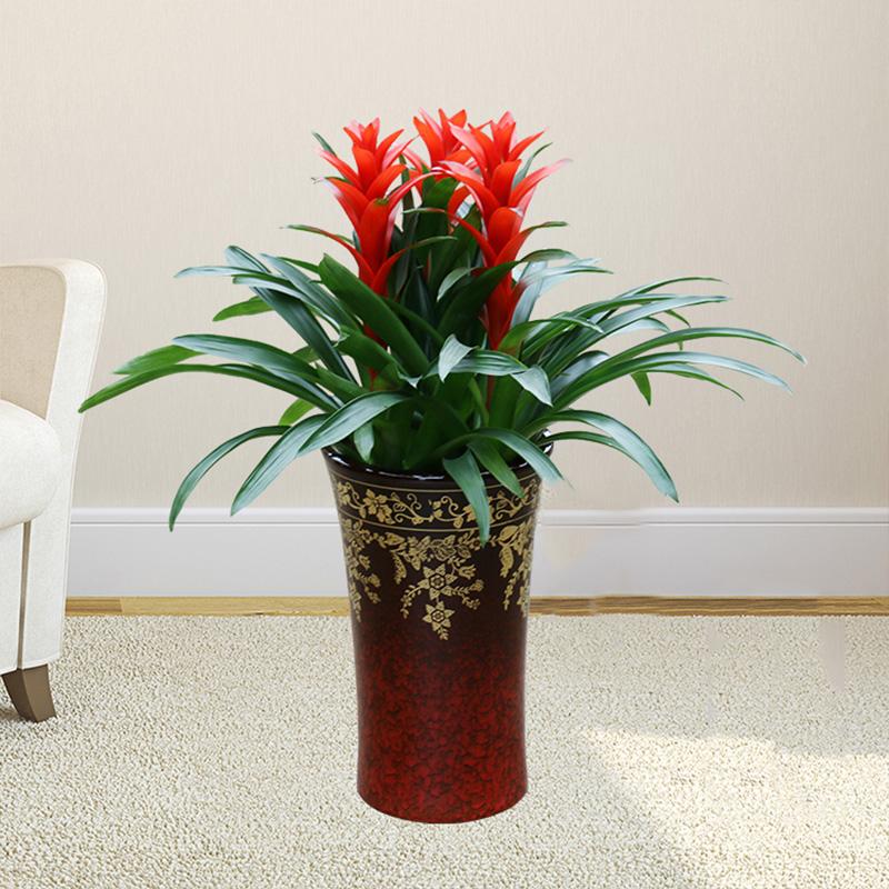 室内花卉盆景养护有什么注意事项?室内花卉盆景养护小技巧