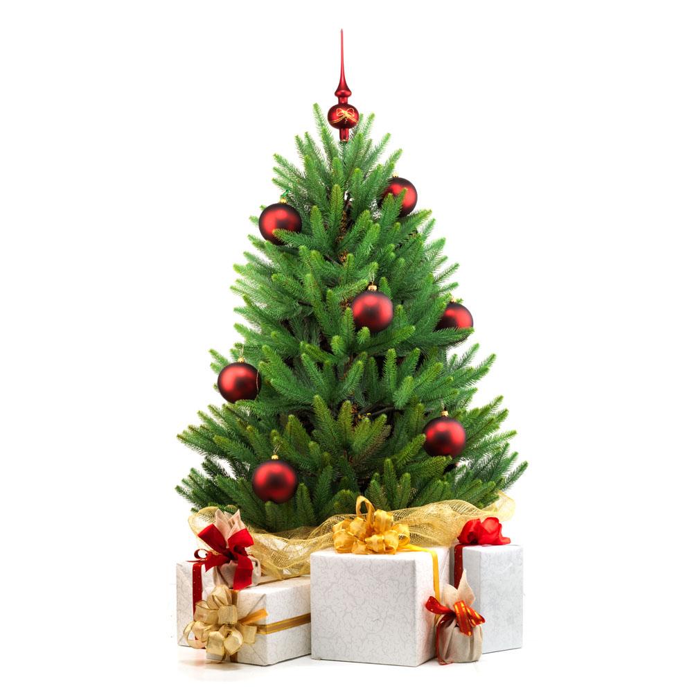 圣诞将至关于世界各地的圣诞树你了解多少?