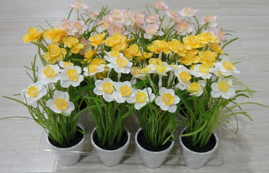 为什么水仙花开花后鳞茎不能栽种