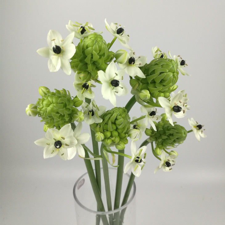 天鹅绒鲜花花语