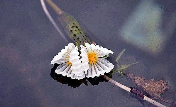 泸沽湖的水性杨花花语