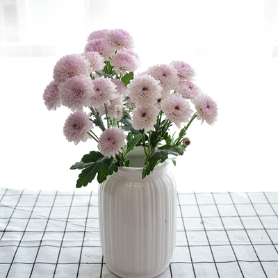 水培菊花的养护方法有哪些