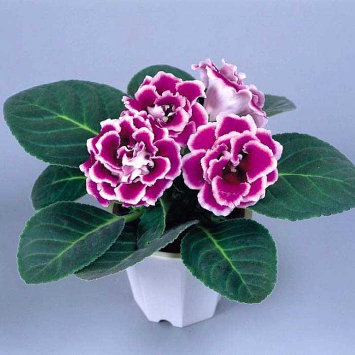 新手养花的注意事项有哪些
