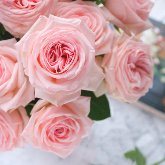 粉荔枝花语