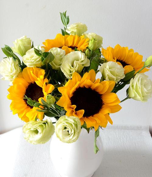 太阳花的花语有哪些